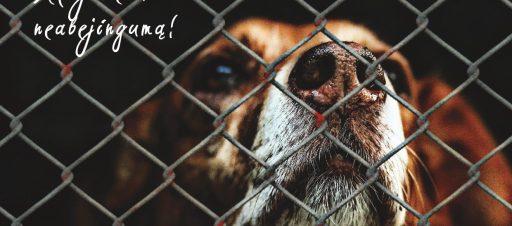 Padėkime beglobiams gyvūnams