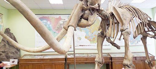 1b klasės mokiniai lankėsi mamuto griaučių ekspozicijoje