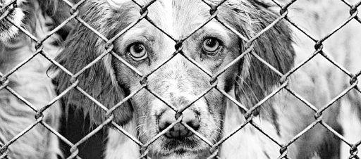 Pagalbos beglobiams gyvūnams akcija. Kviečiame prisijungti!