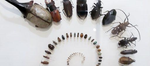 7e klasės išvyka į Zoologijos muziejų